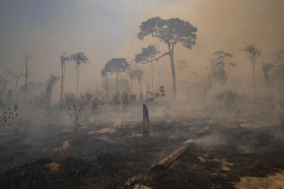Pará é o 2º estado com mais queimadas na Amazônia no mês de agosto, aponta Inpe — Foto: Andre Penner/AP