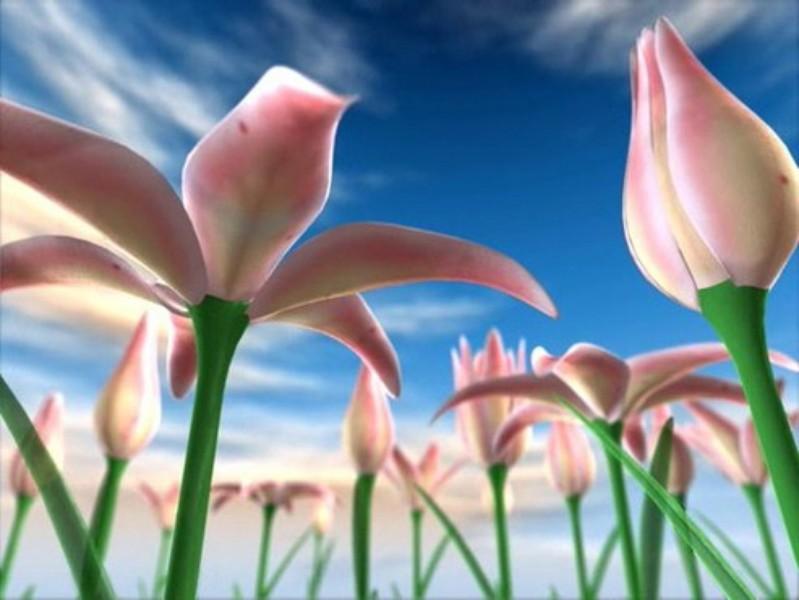 Proteção de Tela: Flowers Meadow 3D | Download | TechTudo