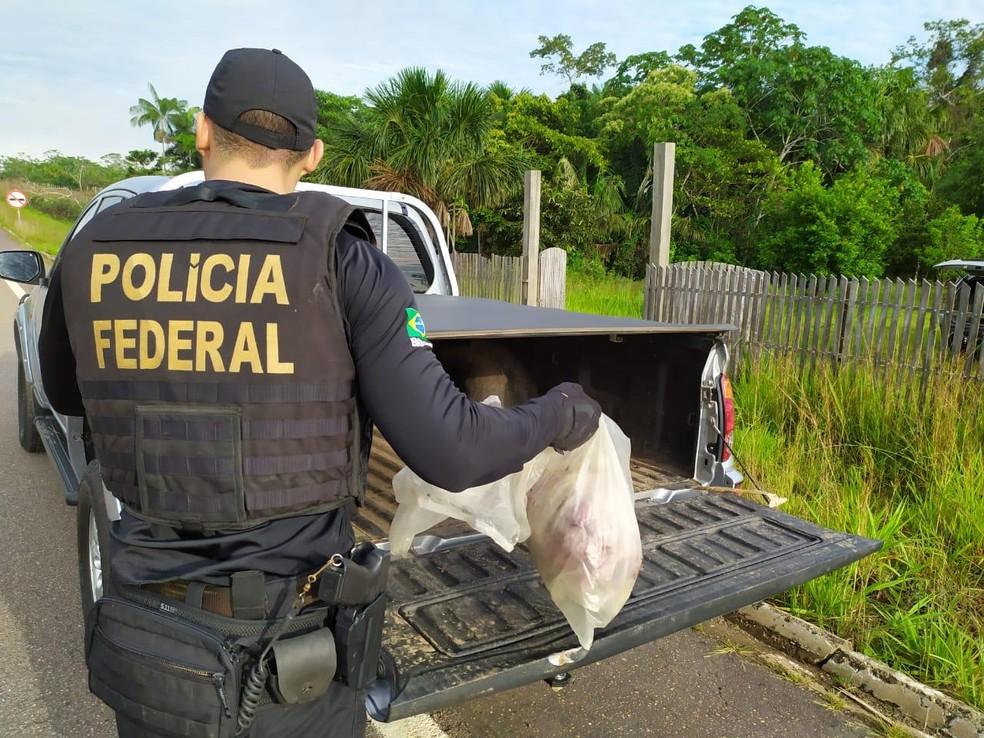 Polícia Federal apreender 7 quilos de carne de caça — Foto: Divulgação PF/AC