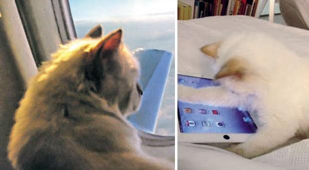 Vida de aristogata: O dia a dia de Choupette virou até livro, com fotos de Lagerfeld (Foto: Reprodução/ Instagram)