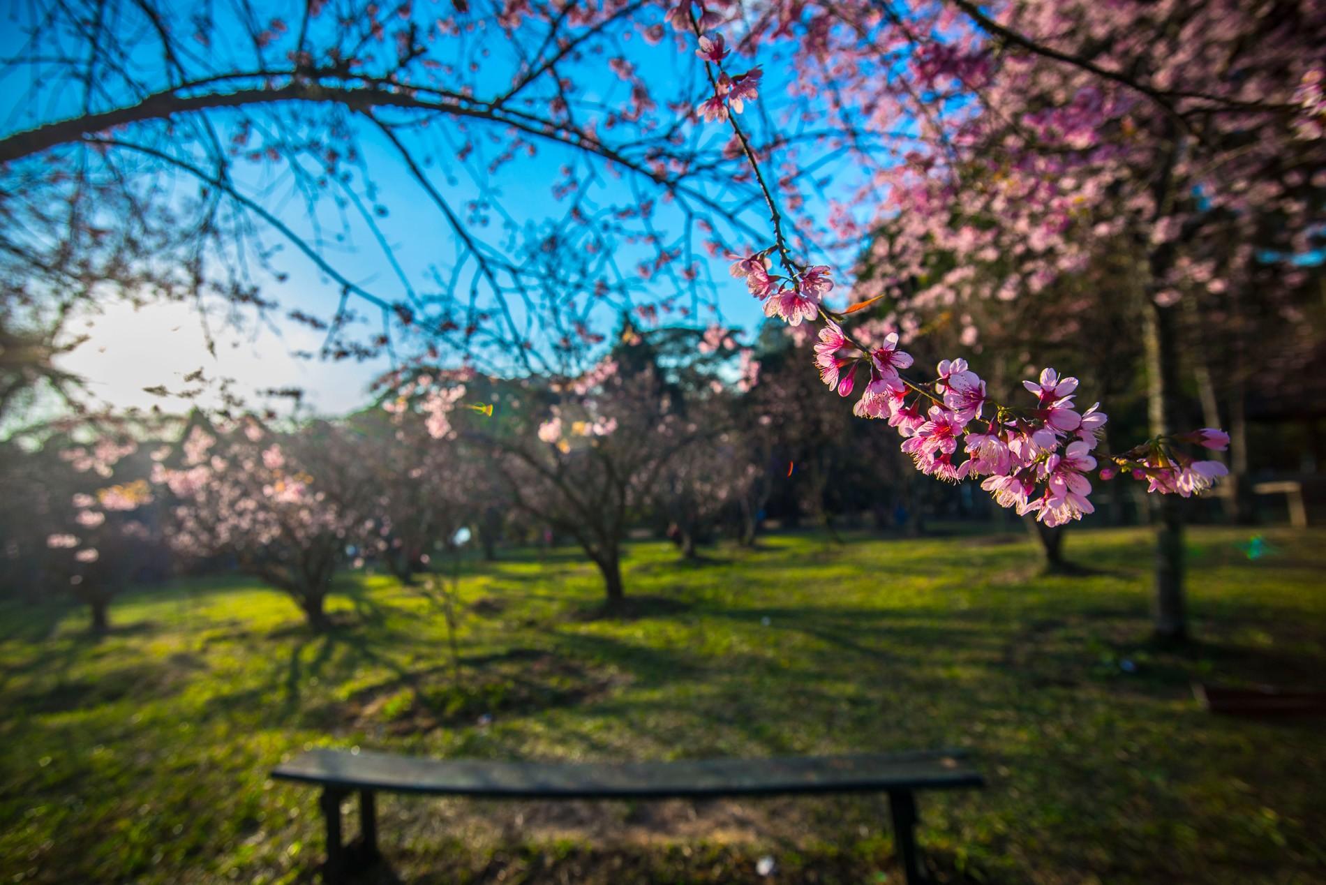 Parque do Carmo vai receber memorial para vítimas mortas por Covid-19 em SP