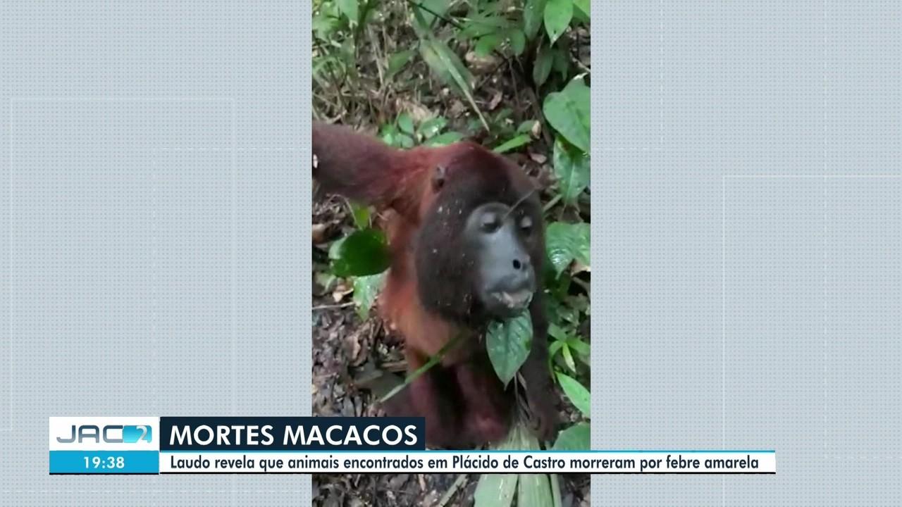Laudo aponta febre amarela em caso de macacos achados agonizando
