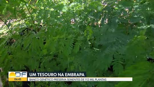 Banco genético da Embrapa preserva sementes de 112 mil plantas