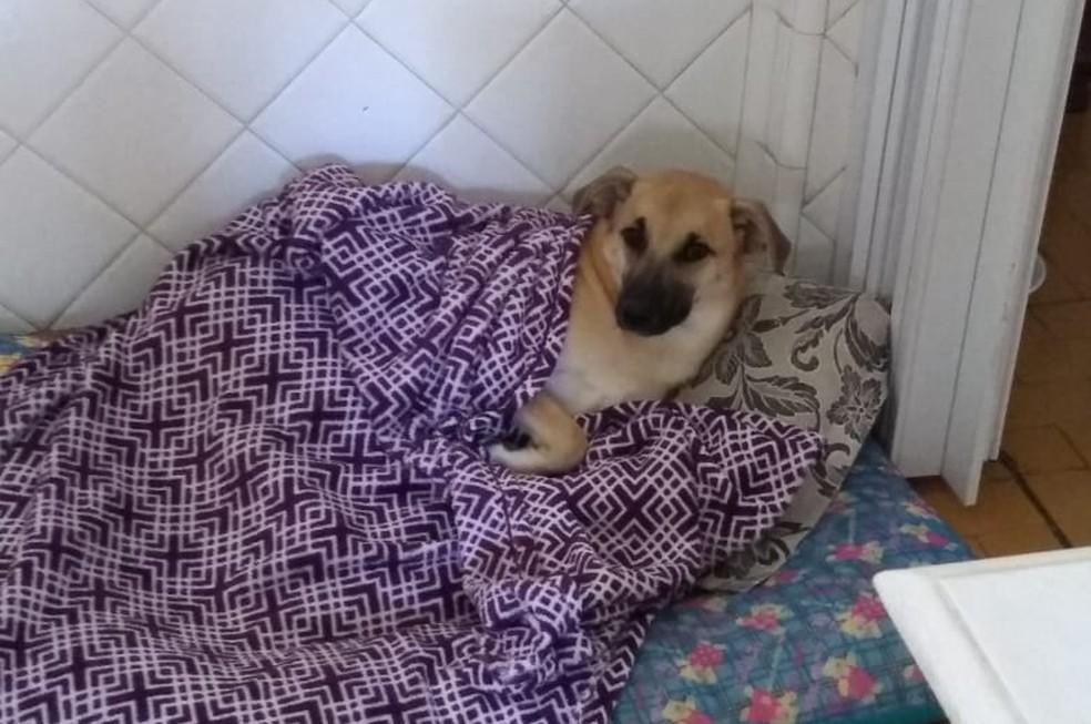 Chico, de Bauru, dorme dentro da casa  — Foto: Arquivo pessoal