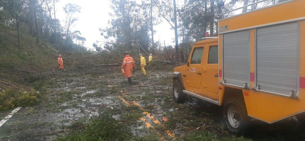 Força voluntária e CRBM trabalham para retirar as árvores e liberar a ERS-135 entre Erechim e Getúlio Vargas — Foto: Força Voluntária Alto Uruguai/Divulgação
