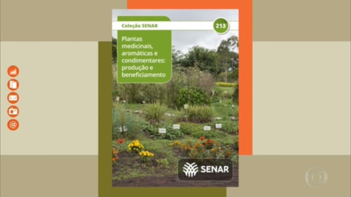 Aprenda a cultivar plantas medicinais
