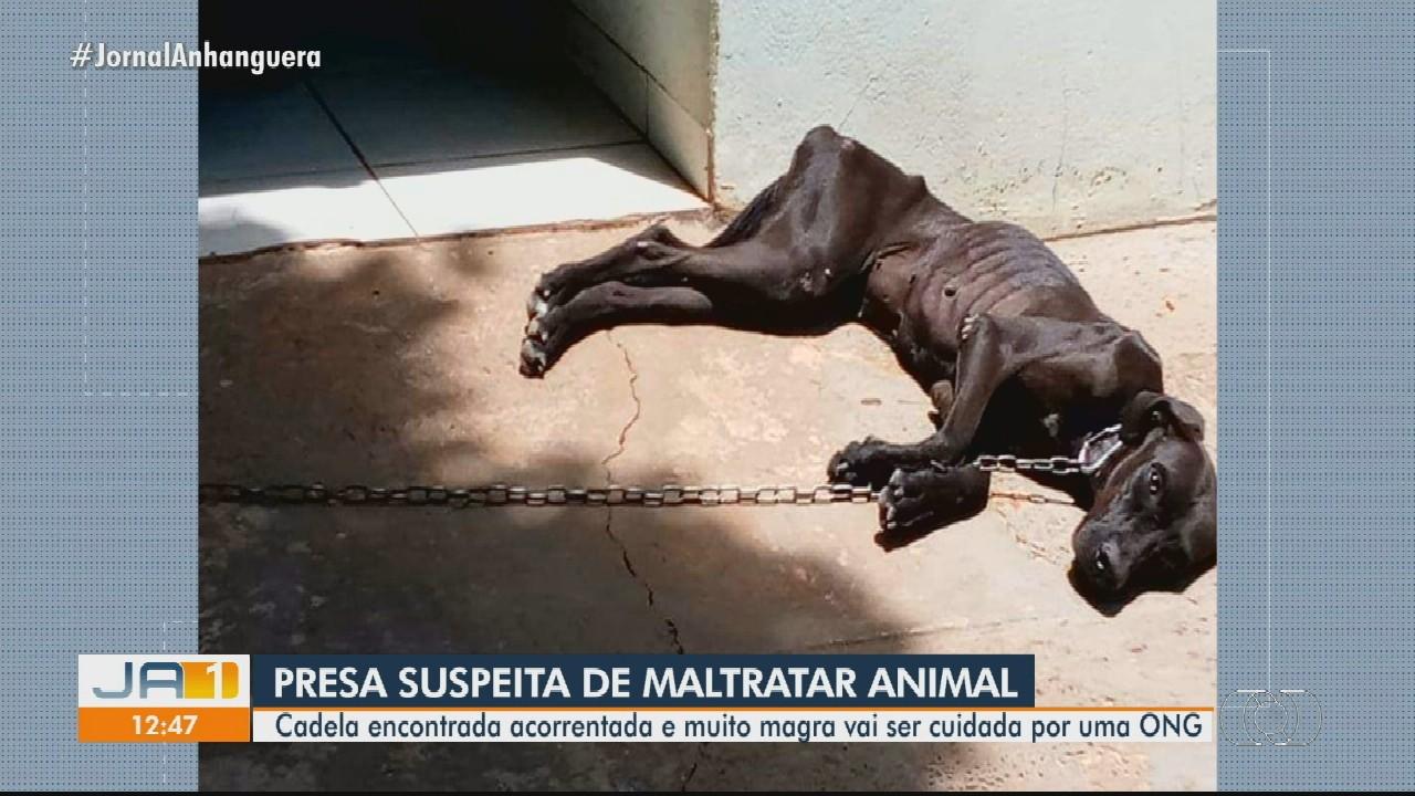 Jovem é presa suspeita de manter cadela acorrentada e sem comida, em Jataí