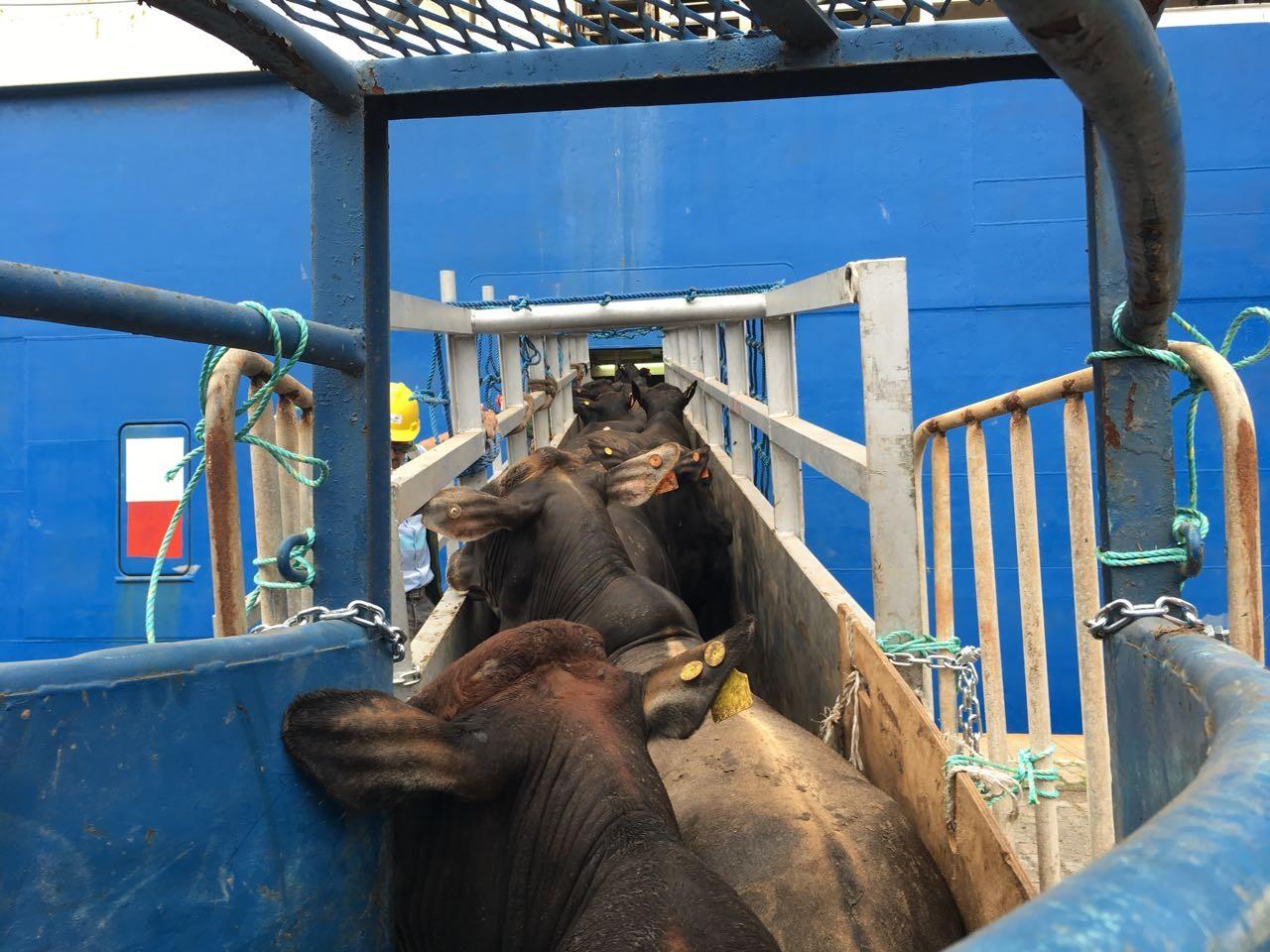 Fachin derruba lei que proibia operação de cargas vivas no Porto de Santos