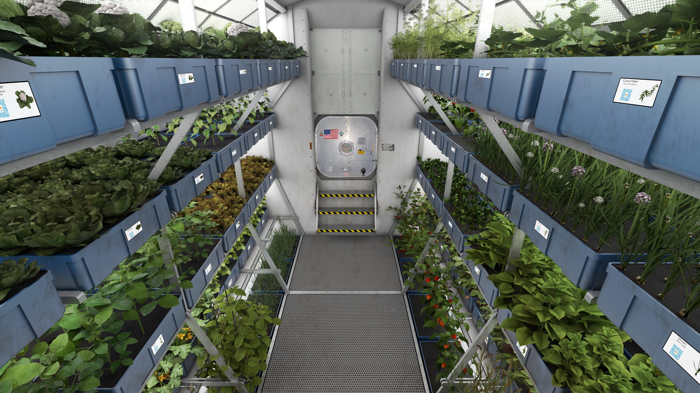 Astronautas Da ISS Comem Pela Primeira Vez Alface Cultivada No Espau00e7o - Galileu | Espau00e7o