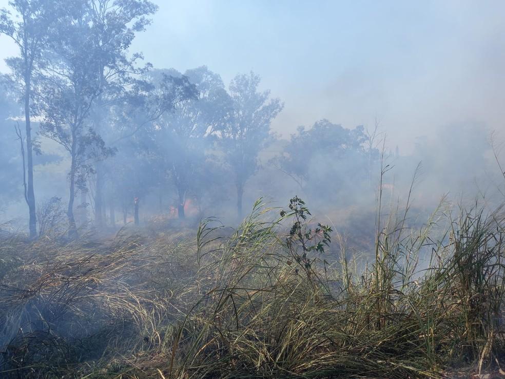 Incêndio atinge área do Horto Florestal de Barra Bonita — Foto: Arquivo pessoal