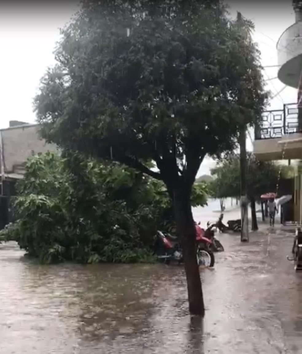 Uma árvore desabou sobre uma motocicleta na região central de Ipueiras, no Ceará — Foto: Arquivo pessoal