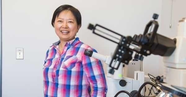 Xin Zhang, professora da escola de engenharia da Universidade de Boston (Foto: Divulgação )