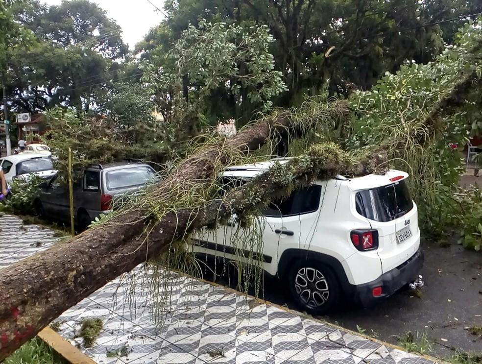 e57325d551 ... Árvores atingiram carros em Cruzeiro — Foto  João Batista Vanguarda  Repórter