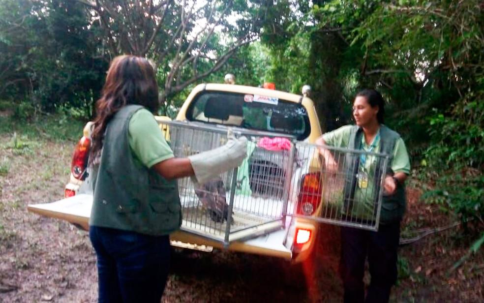 Animais foram soltos em reserva ecológica de Mata de São João (Foto: Divulgação)