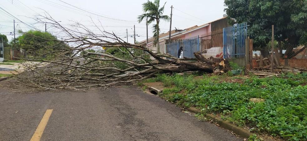 Árvores também caíram em Cascavel, no oeste — Foto: Sidnei Trindade/RPC