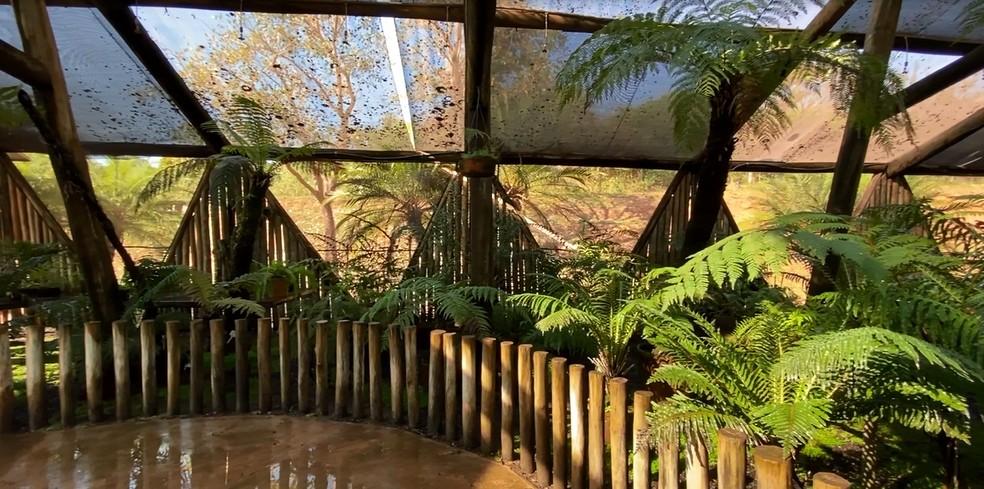 Coleção de plantas no Jardim Botânico em Bauru — Foto: Jardim Botânico de Bauru/Divulgação