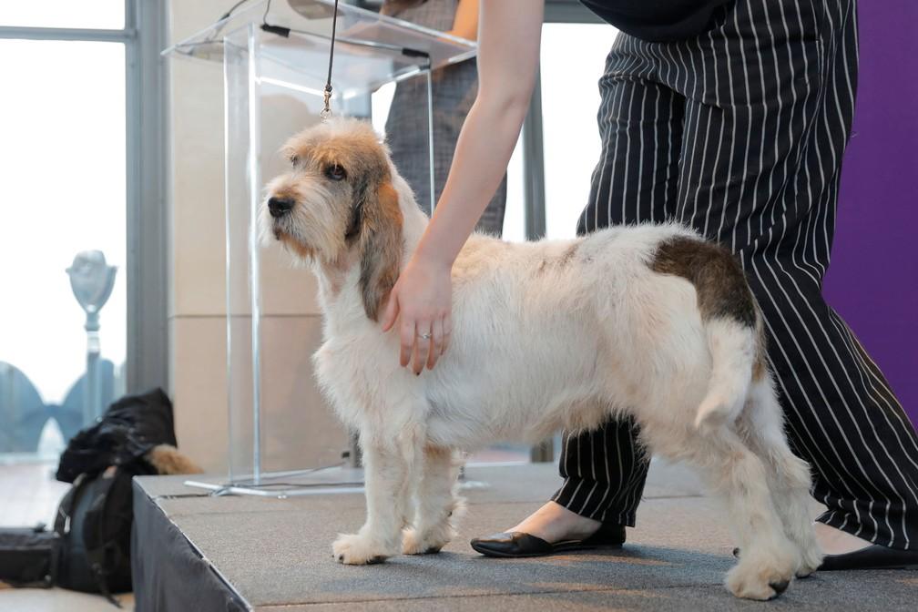 Grand Bassett Griffon Vendeens é apresentado — Foto: Lucas Jackson/Reuters