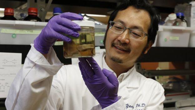 Peter Yang, um dos autores do estudo, exibe amostras de chifres de cervos (Foto: PAUL SAKUMA/STANFORD SCHOOL OF MEDICINE)