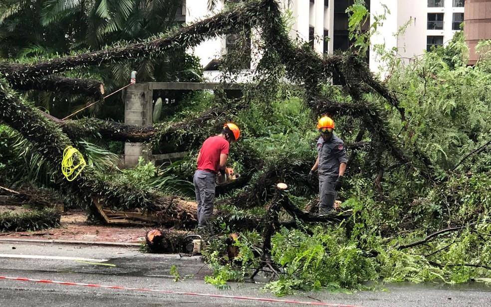 Uma árvore de grande porte caiu em cima de um carro na Alameda Santos, próximo à Rua Augusta. Segundo os bombeiros, o motorista foi socorrido e levado ao Hospital Beneficência Portuguesa. — Foto: Flávio Silva/Arquivo Pessoal