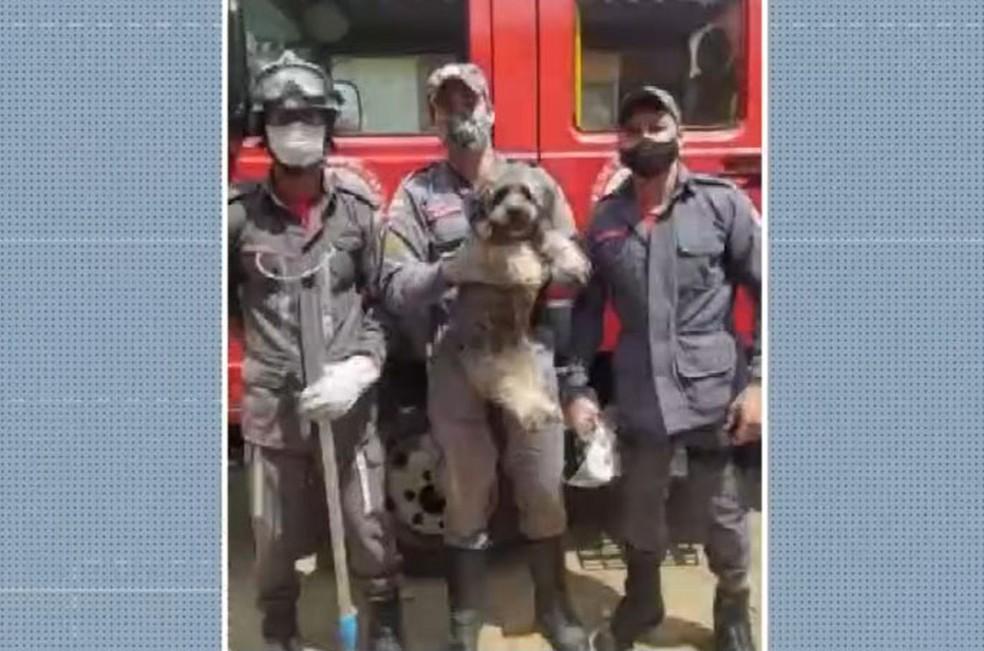 Cachorro é resgatado por bombeiros após ficar preso em vão de 20 cm entre muros, na Bahia — Foto: Reprodução/TV Bahia