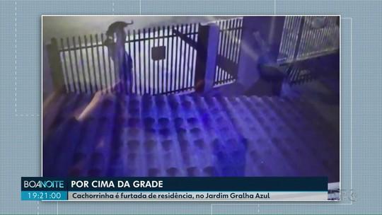 Ladrão passa cachorrinha por cima de grade no Jardim Gralha Azul