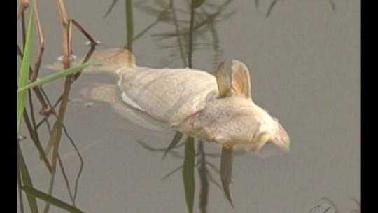 Peixes são encontrados mortos em igarapé no reservatório de Belo Monte