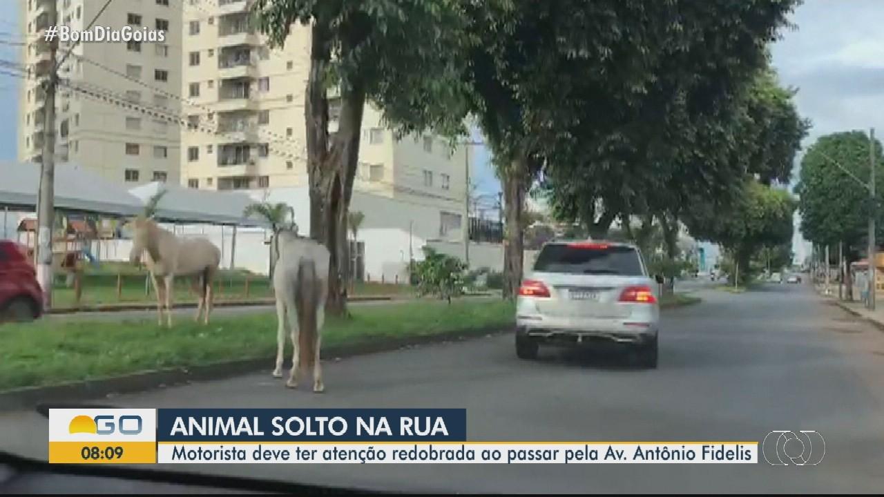 Motorista flagra cavalos soltos em avenida no Parque Amazônia, em Goiânia
