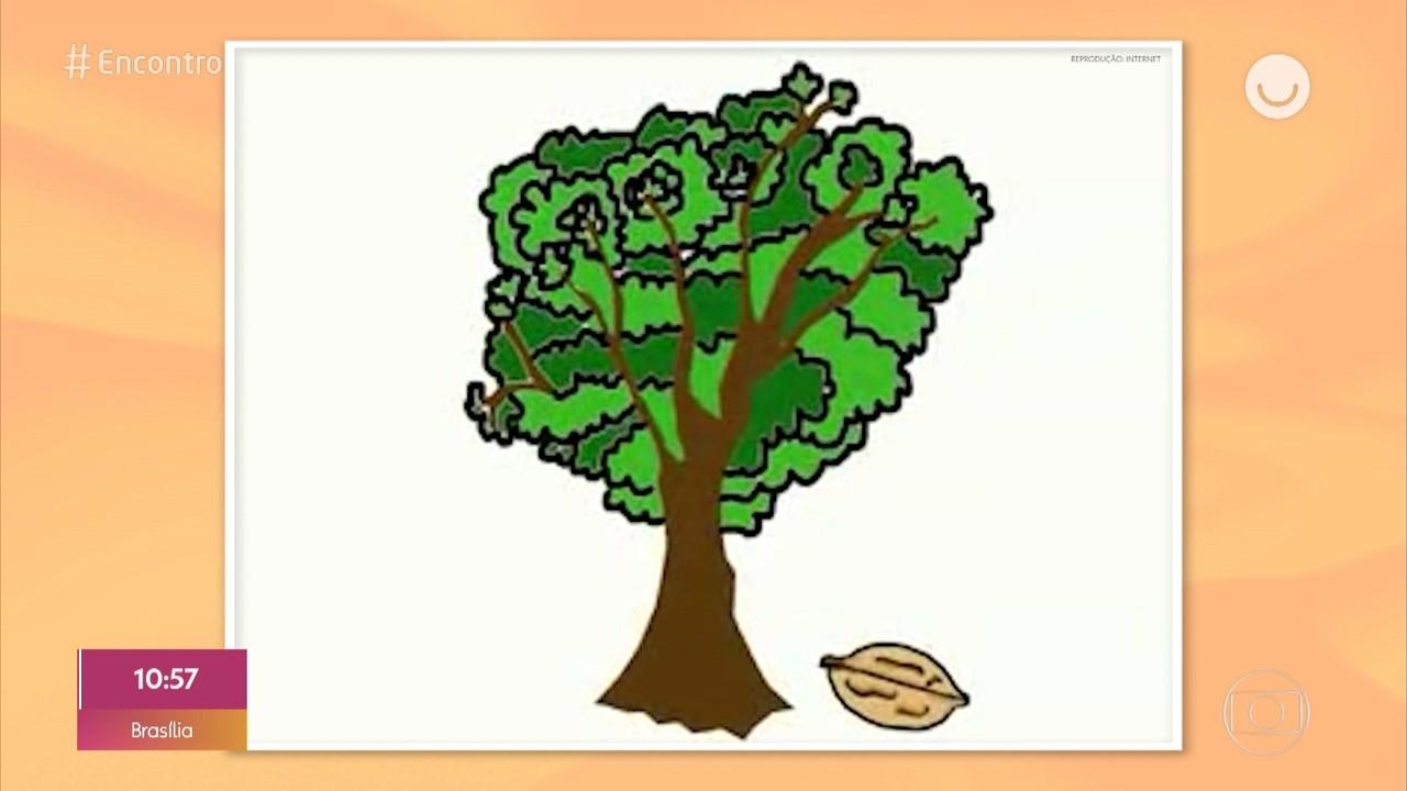 Por onde anda José Maria, do meme 'As árvores somos nozes'