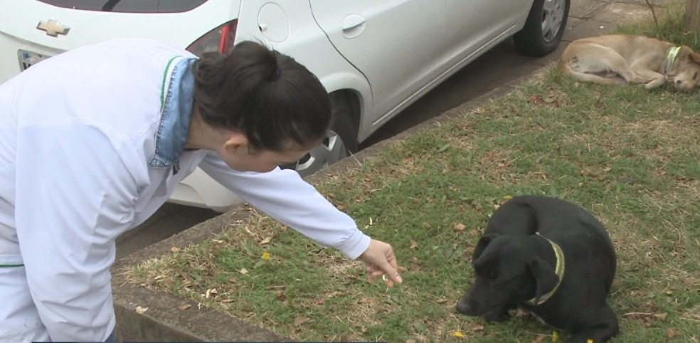 Cães ganham simpatia dos funcionários do hospital em Xanxerê — Foto: Reprodução/NSC TV