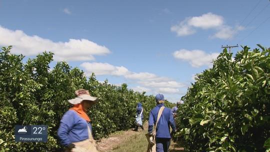 Safra de laranja tem queda de 28,2% em SP e MG, diz Fundecitrus