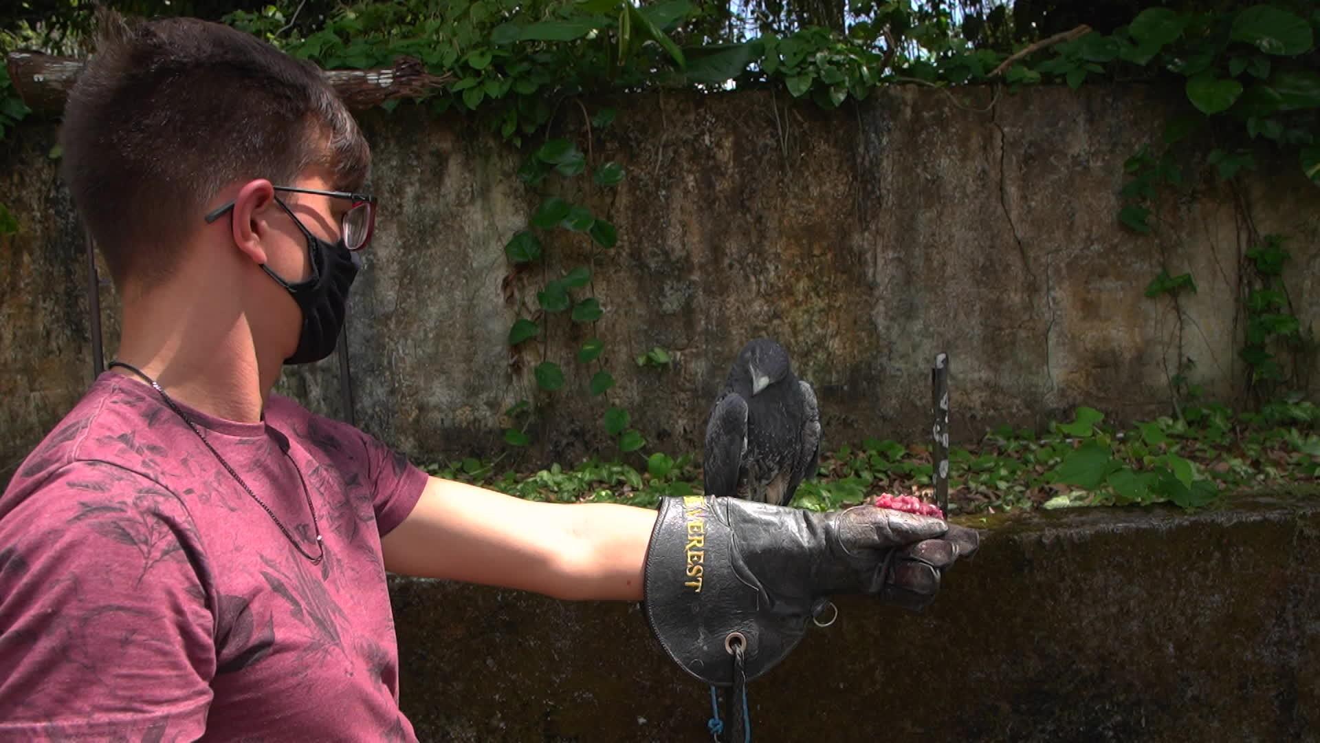 Animais silvestres feridos são reabilitados com ajuda de acupuntura, fisioterapia e outras técnicas no Recife