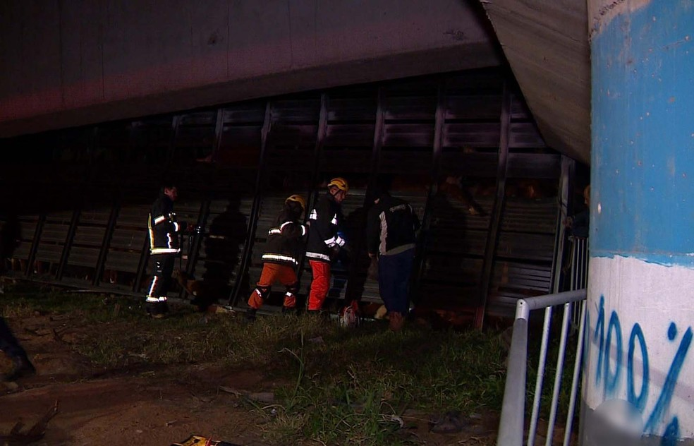 Equipes trabalham para retirada de animais da carroceria (Foto: Reprodução/RBS TV)