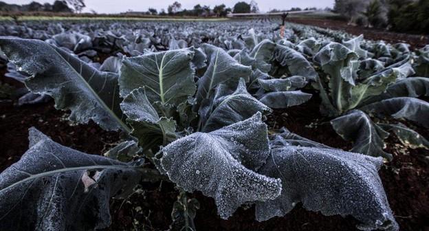 geada-frio-plantacao-clima-tempo-temperatura-geadas
