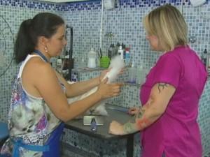Grommer são especializadas na tosa de animais  (Foto: Reprodução / TV TEM)
