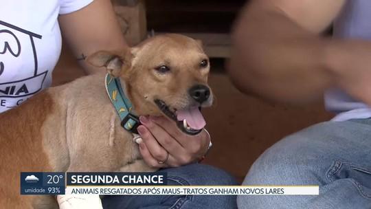 Animais que sofreram maus-tratos têm uma segunda chance em lares adotivos