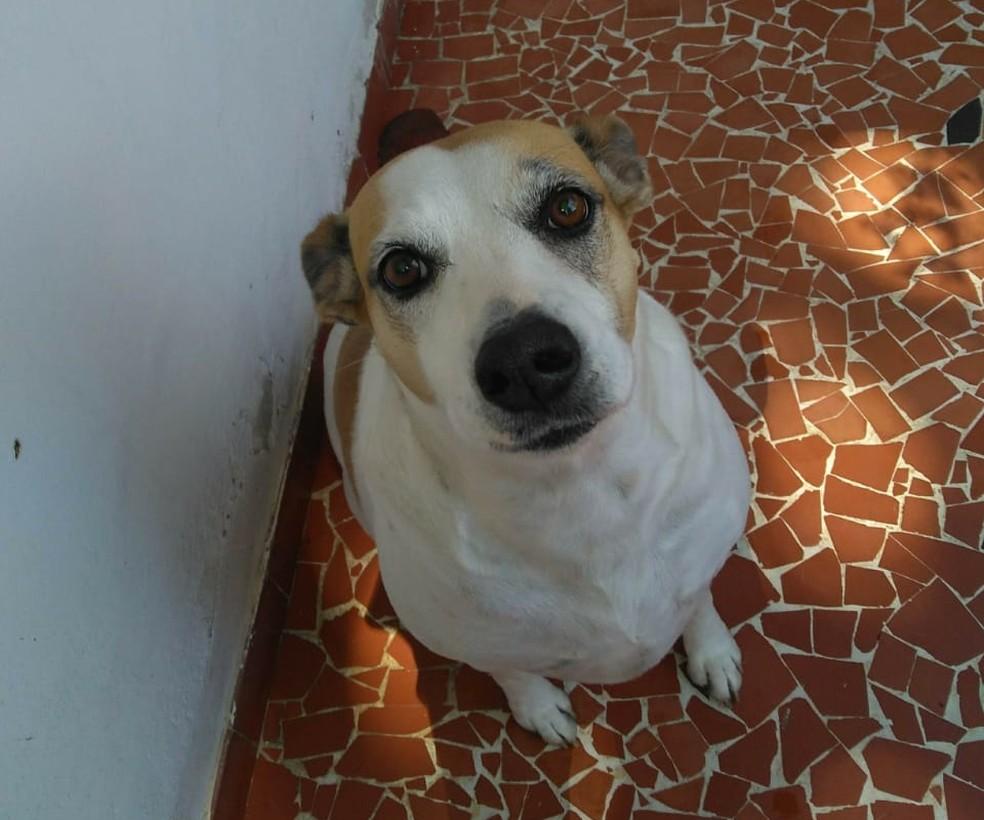 Nina fue rescatada de las calles hace tres años - Foto: Archivo personal