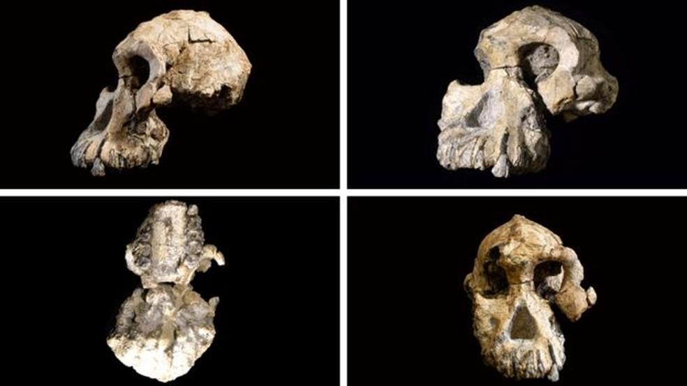 O crânio encontrado tem um maxilar proeminente e pequenos orifícios no lugar do ouvido — Foto: Divulgação/Museu de História Natural de Cleveland
