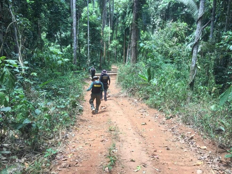 Polícia Federal identifica áreas de desmatamento e grilagem em terras indígenas de Altamira — Foto: Polícia Federal