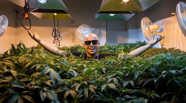 Haupt planta maconha desde o ensino médio (Foto: Reprodução/CNBC)