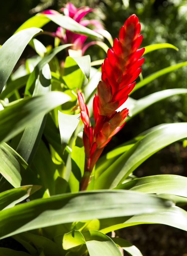 13 Plantas Para Jardins Ou Varandas Com Muito Sol Casa E