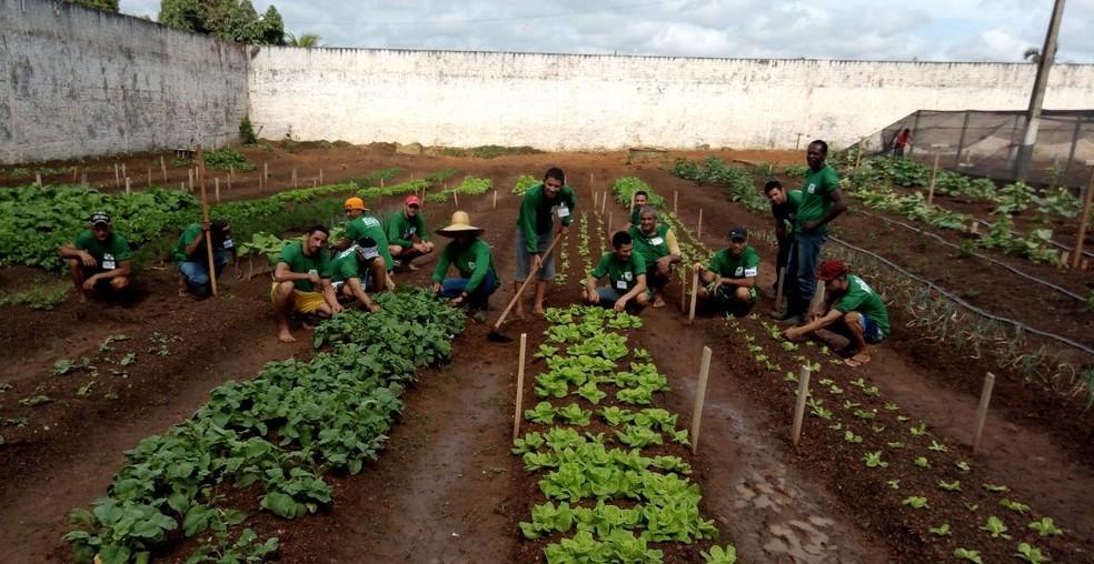Presos estão plantando hortaliças orgânicas para escolas e hospitais (Foto: Fabrício Pittelkow/Arquivo Pessoal)