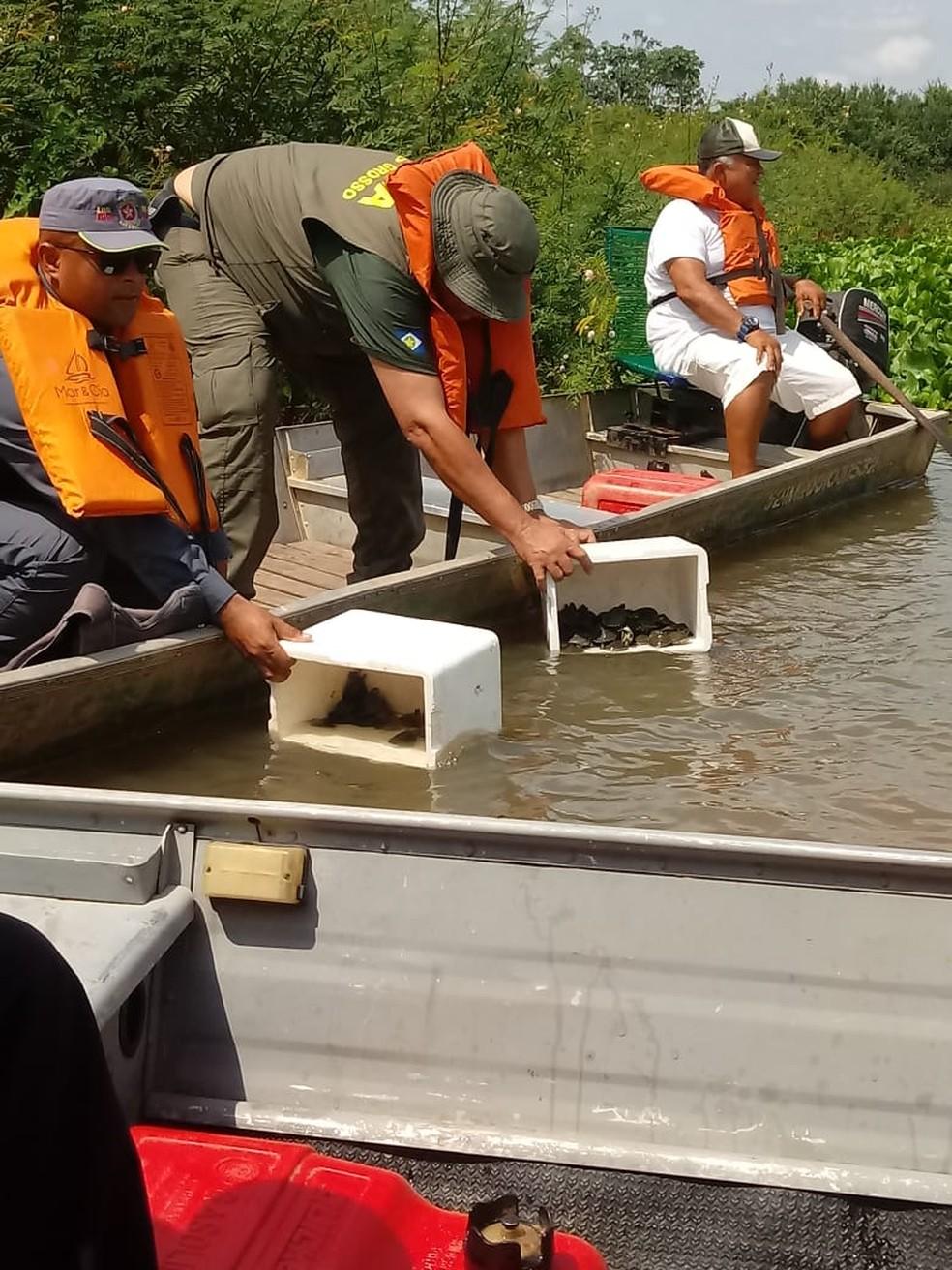 Tartarugas serão soltas no Rio Araguaia — Foto: Projeto Amigos da Natureza/Divulgação