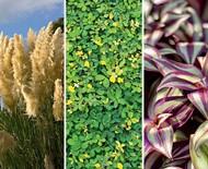 6 plantas nativas do Brasil para cultivar no seu jardim