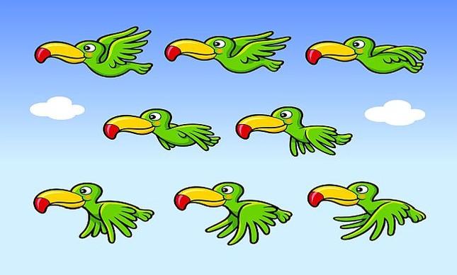 Tucanos (Foto: Pixabay)
