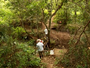 Saúde faz buscas por macacos mortos em mata perto de onde animal foi encontrado em Varginha (Foto: Reprodução/EPTV)
