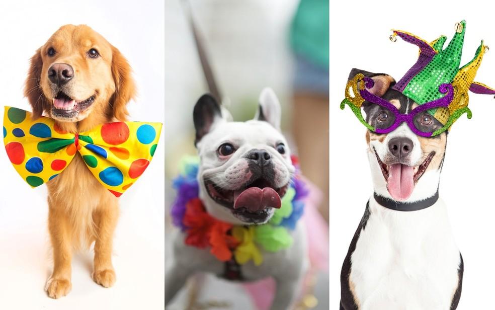 Cães com artigos de fantasia em Goiânia, Goiás — Foto: Assessoria do Goiânia Shopping/Divulgação
