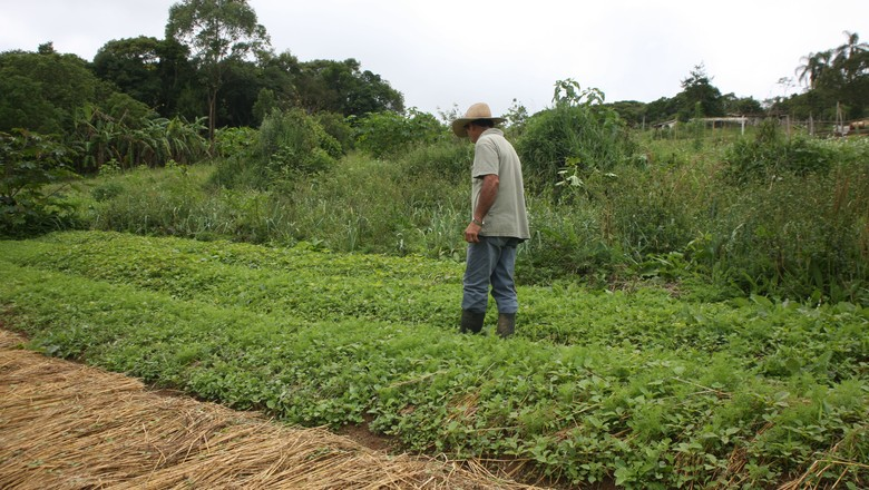 Agricultura familiar (Foto: Manoel Marques/arquivo Editora Globo)