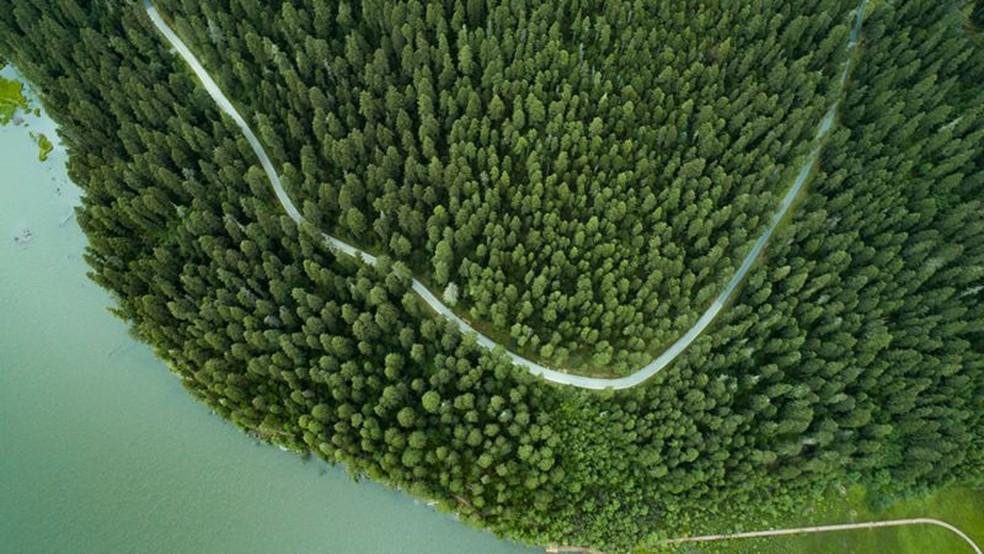 China está envolvida em grandes programas para preservar e expandir suas florestas — Foto: Getty Images via BBC