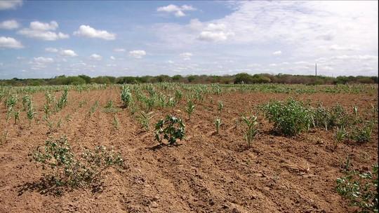 Seca ameaça agricultura irrigada na divisa da Bahia e Pernambuco