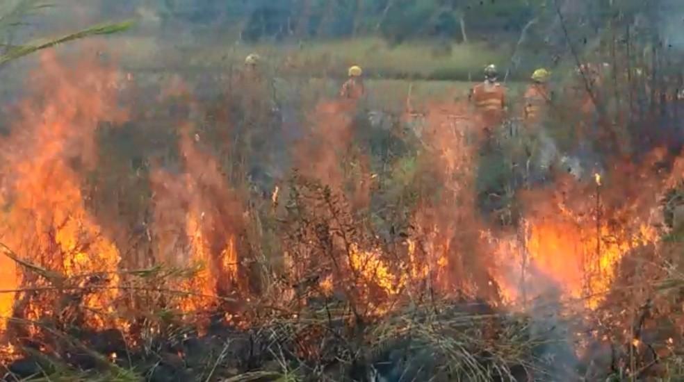 Bombeiros apagam incêndio florestal no DF — Foto: Corpo de Bombeiros/ Divulgação